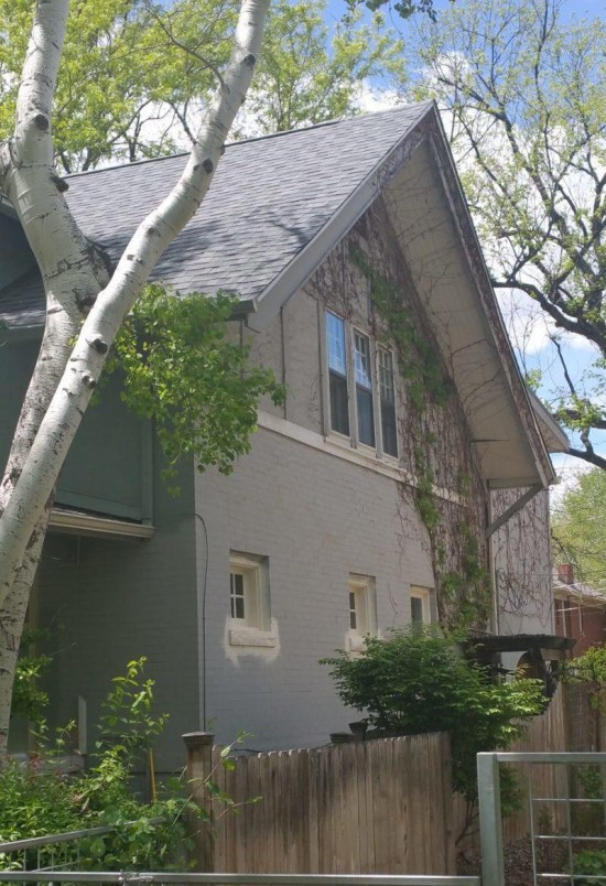 residential and commercial painting vines before